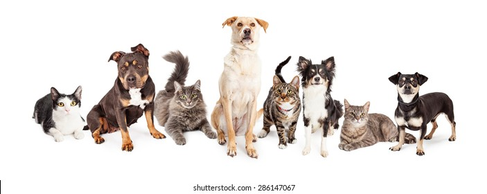 Group of cats and dogs of different sizes and breeds together. Isolated on white.