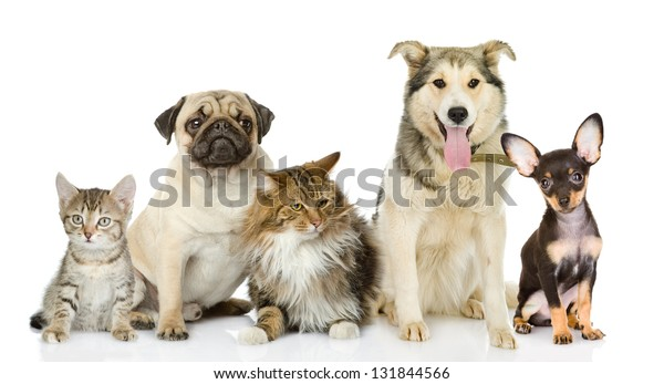 Group of cats and dogs in front. looking at camera. isolated on white background