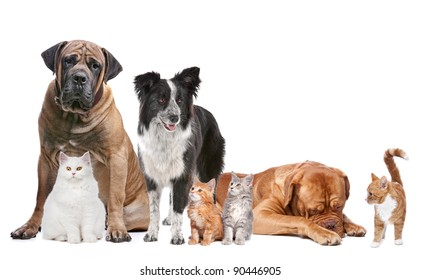 Group of Cats and Dogs in front of a white background