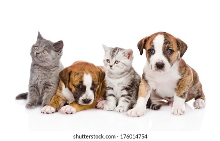 Group of cats and dogs sitting in front. isolated on white background