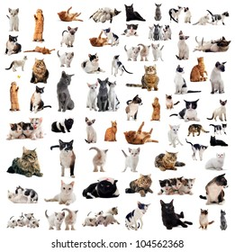 group of cats and kitten on a white background