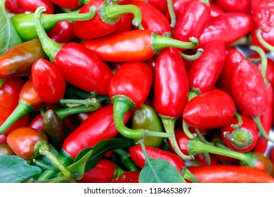 Group of chili peppers( chile pepper, chilli pepper, or simply chilli) isolated on white background.Capsaicin, the chemical in chili peppers is used as an analgesic in topical ointments, nasal sprays.