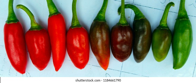 Group chili peppers isolated on white background.Capsaicin extracted from chilies is used in pepper spray and tear gas as chemical irritants, forms of less-lethal weapons for control of unruly crowds.