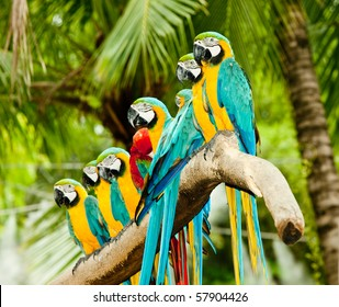 A group of colorful macaw on the tree