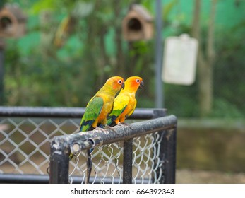 group of colorful parrot on metal fence with blur background
