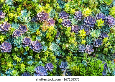 A group of colorful succulent plants