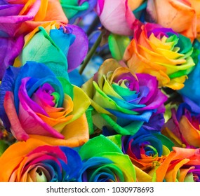 Group of colourful  rose with seven colour or rainbow rose.