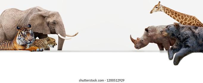 Zoo Images Stock Photos & Vectors Shutterstock