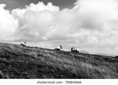 A group of cows on a mountain peak, beneath a deep sky with big clouds