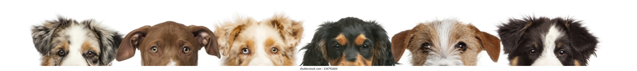 group of cropped view of Dog heads isolated on white