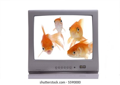 A group of curious goldfish on a television screen stare out at the viewer.