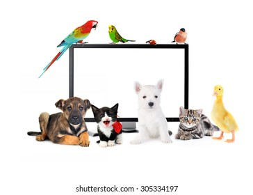 Group of cute animals near TV