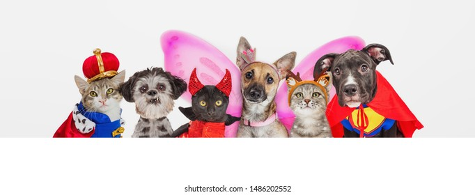 Group of cute dogs and cats wearing Halloween costumes in a row over blank white horizontal web banner