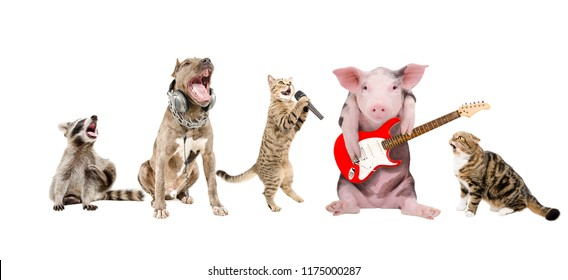 Group of cute funny animals musicians, isolated on white background