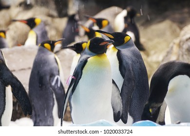 Group of cute penguins in  zoo.