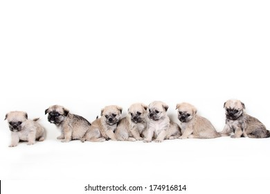 Group of cute puppies on white background