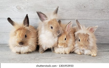Group of cute rabbits on wooden background.