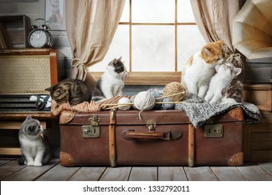 Group of cute striped kittens basking on a suitcase with balls of yarn near the window