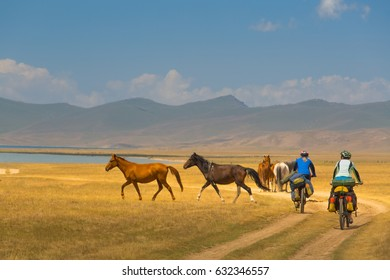 Group of cyclists with a large backpack for bicycling, rides on a mountain dirt road, winding road in the dry desert valley. Along the lake and flocks of wild horses. Sunny day, high mountains.