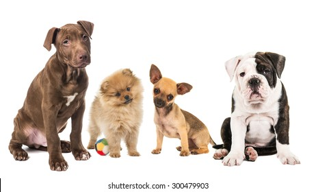 Group of different breed of puppies isolated at a white background
