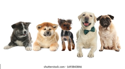 Group of different dogs on white background