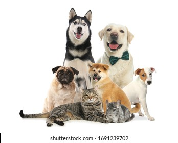 Group of different pets on white background