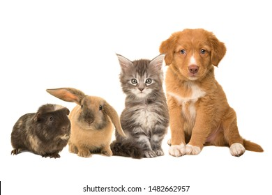 Group of different pets, a puppy, kitten, rabbit and a guinea pig