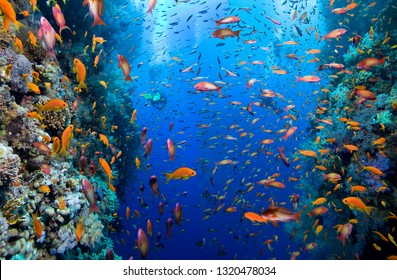 Group of divers explore colorful coral reef.