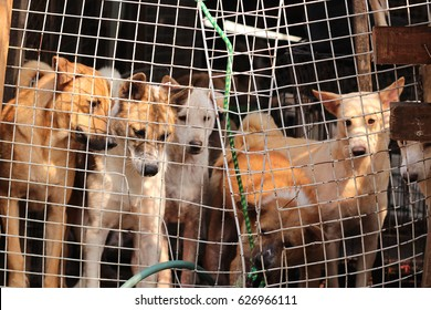 A group of dog in the cage