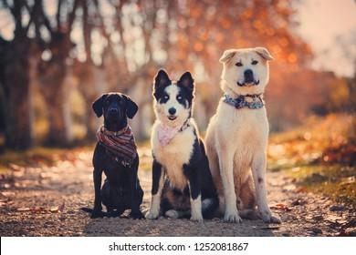 group of dog posing