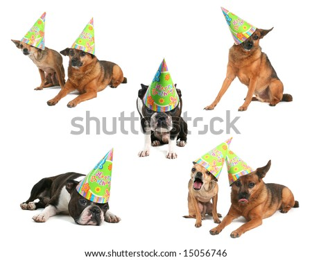 A Group Of Dogs With Birthday Hats On