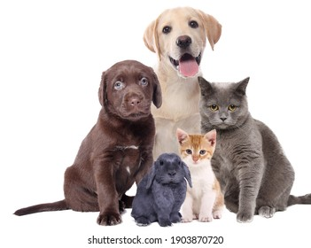 Group of dogs, cats and a rabbit