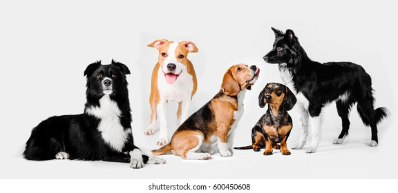 Group of dogs different breed