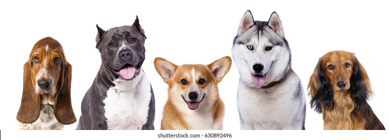 Group  dogs in front of white background