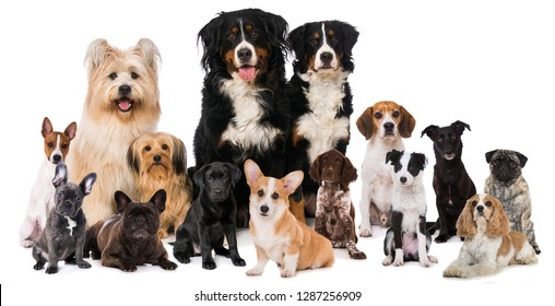 Group of dogs isolated on white background