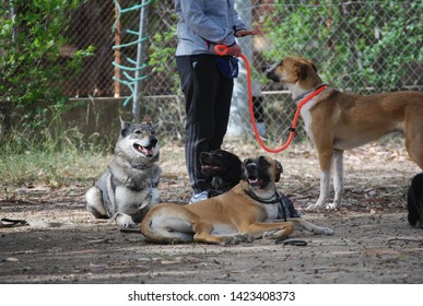 Group of Dogs at Obedience School