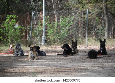 Group of Dogs on Obedience Course