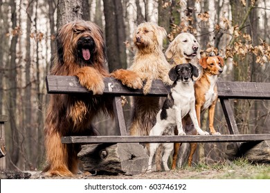Group dogs on seat in the park