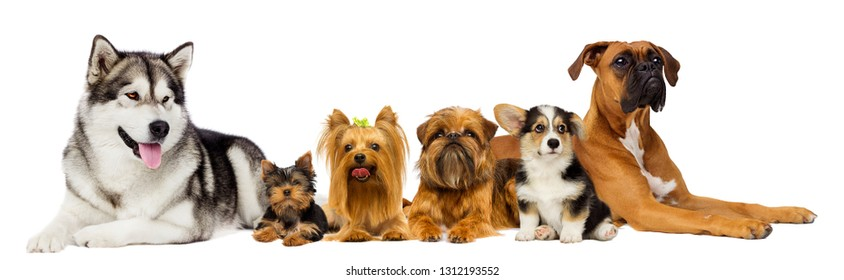 group of dogs on a white background