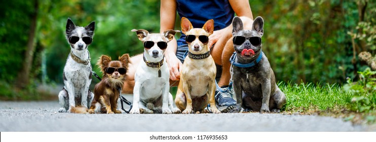 group of dogs with owner and  leash ready to go for a walk or walkies , outdoors outside at the park all wearing fancy sunglasses