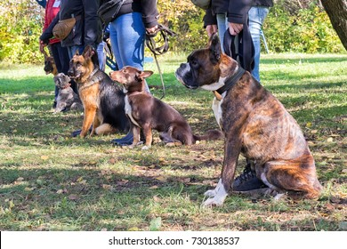Group of dogs with owners at obedience class