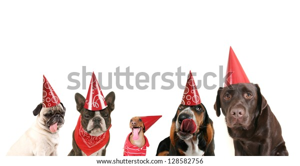 a group of dogs with party hats on
