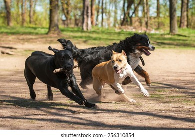 Group of dogs playing in the park