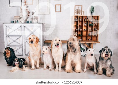 A group of dogs are sitting. 2019. Friendly family. What we are all different. One for all and all for one. Different breeds of dogs. Toning, Vignetting.Postcard. Numbers. Out of focus.Canistherapy.