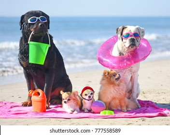 group of dogs sitting on the beach