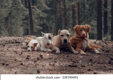 group of dogs, summer, park, wood