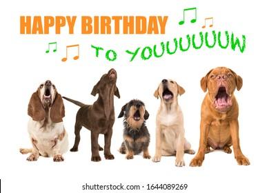 Happy Birthday Animals Images Stock Photos Vectors Shutterstock