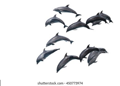 Group dolphin isolated on white background.