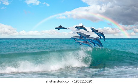 Group of dolphins jumping on the water Rainbow in the background - Beautiful seascape and blue sky - Shutterstock ID 1903115320
