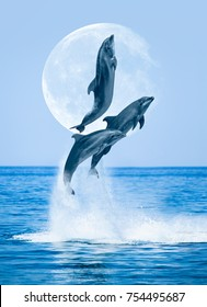 "Group of dolphins jumping on the water - Beautiful seascape with sea and super moon ""Elements of this image furnished by NASA """
